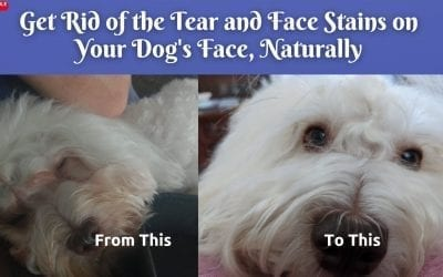 The Secret To Removing Tear Stains On Dogs Face Naturally