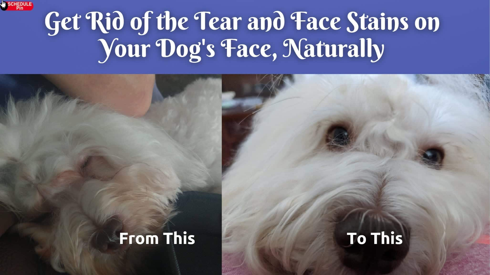Get Rid of Red Stains On White Dogs Face - Dr.DarHawks 2020-11-22_11-12-29