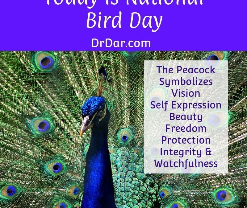 Celebrating Peacock Symbolism on National Bird Day